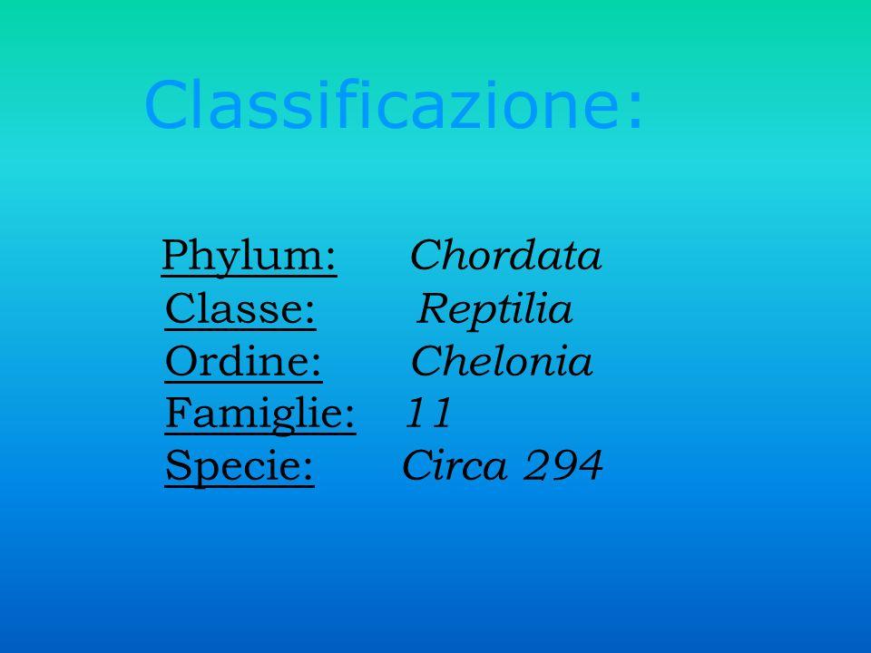 Phylum: Chordata Classe: Reptilia Ordine: Chelonia Famiglie: 11 Specie: Circa 294 Classificazione: