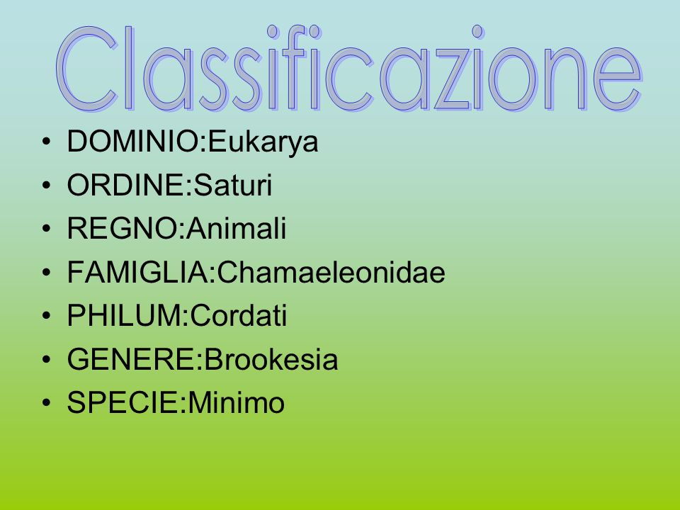 DOMINIO:Eukarya ORDINE:Saturi REGNO:Animali FAMIGLIA:Chamaeleonidae PHILUM:Cordati GENERE:Brookesia SPECIE:Minimo