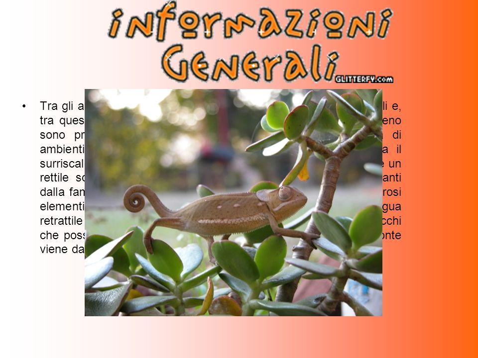 I principali elementi morfologici che accomunano tutte le specie di camaleonti sono la struttura delle zampe, gli occhi, la mancanza di orecchie, e la lingua.