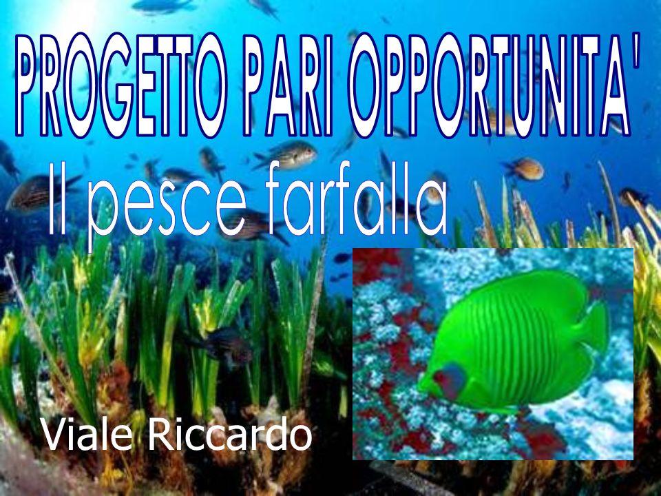 Viale Riccardo