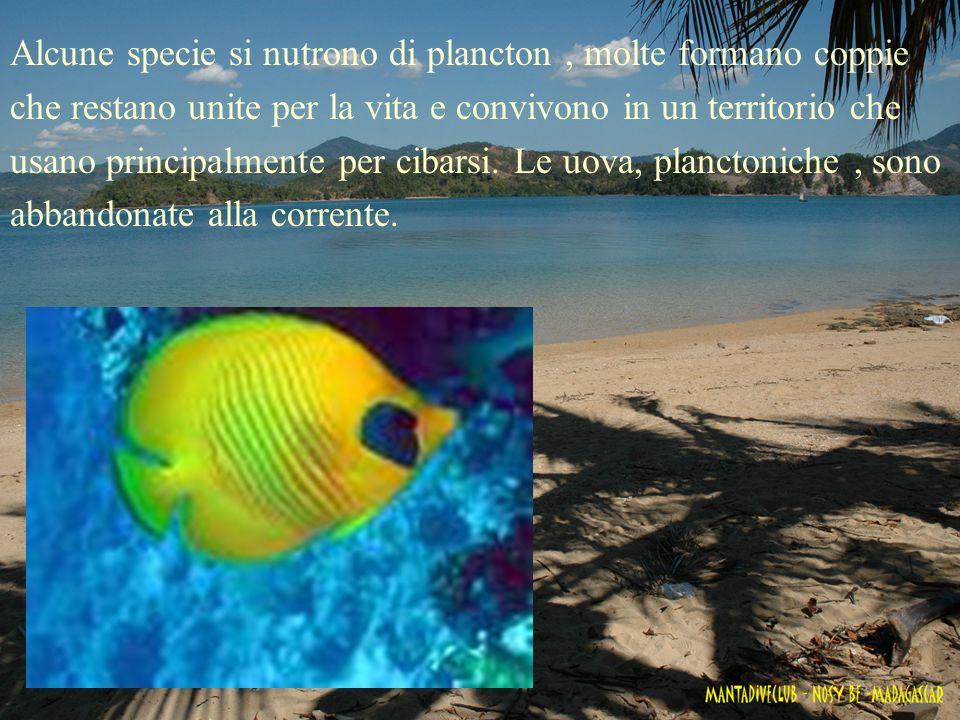 Alcune specie si nutrono di plancton, molte formano coppie che restano unite per la vita e convivono in un territorio che usano principalmente per cib