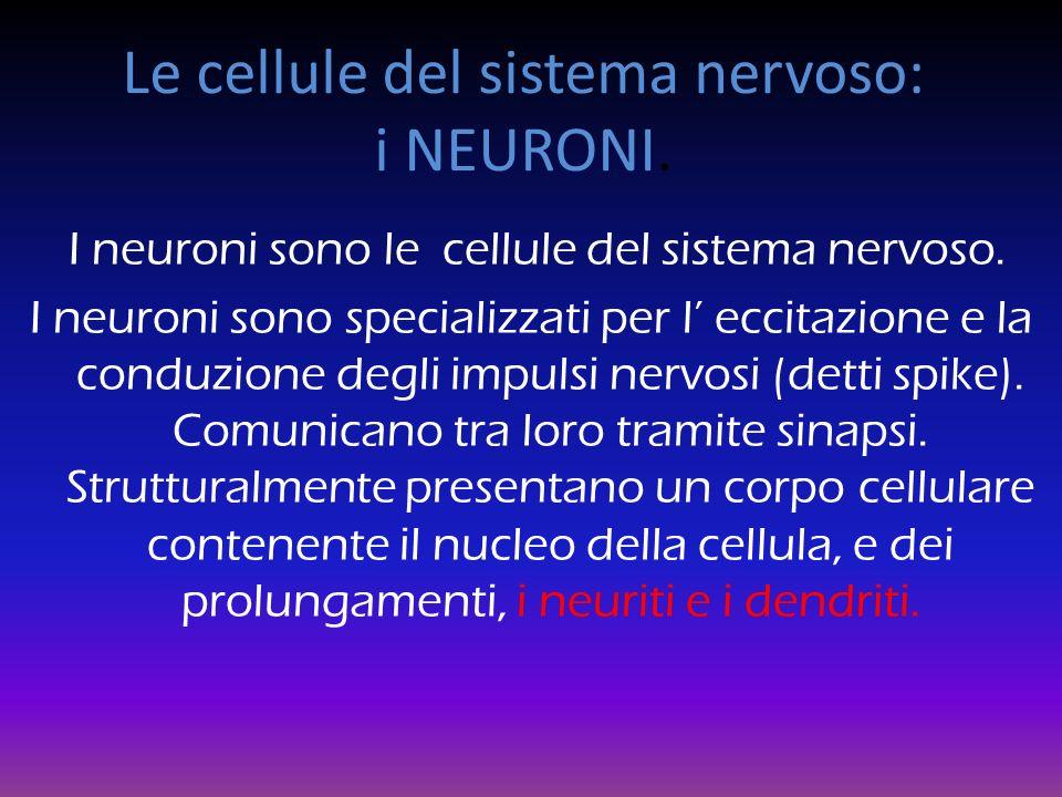 Le cellule del sistema nervoso: i NEURONI.I neuroni sono le cellule del sistema nervoso.