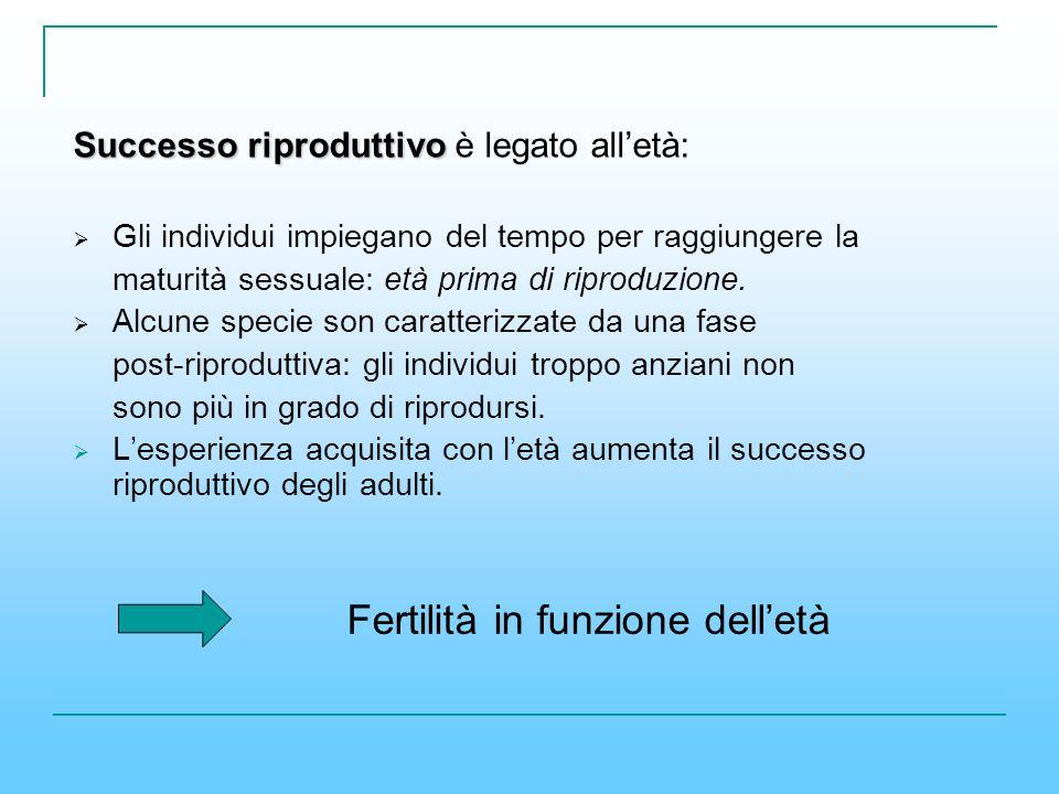 Successo riproduttivo Successo riproduttivo è legato alletà: Gli individui impiegano del tempo per raggiungere la maturità sessuale: età prima di ripr