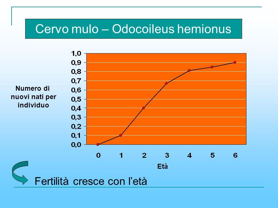Età Numero di nuovi nati per individuo Cervo mulo – Odocoileus hemionus Fertilità cresce con letà