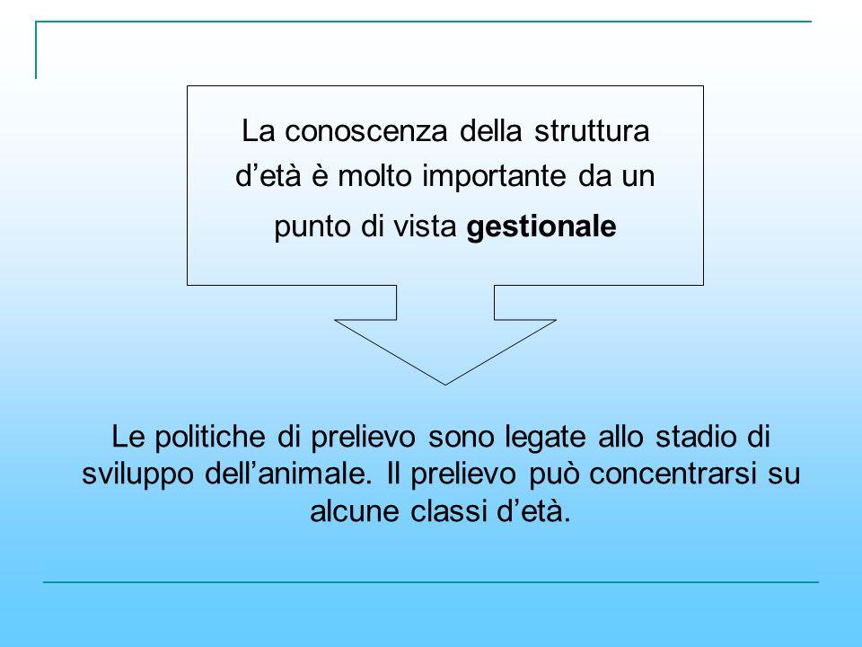 La conoscenza della struttura detà è molto importante da un punto di vista gestionale Le politiche di prelievo sono legate allo stadio di sviluppo del