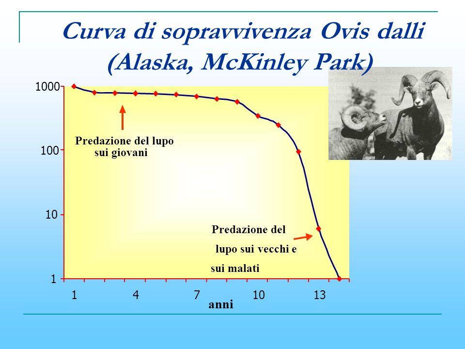 1 10 100 1000 1471013 Predazione del lupo sui vecchi e sui malati Predazione del lupo sui giovani anni Curva di sopravvivenza Ovis dalli (Alaska, McKi