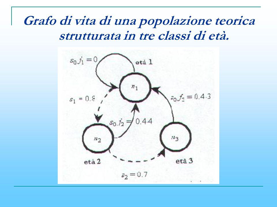 Grafo di vita di una popolazione teorica strutturata in tre classi di età.
