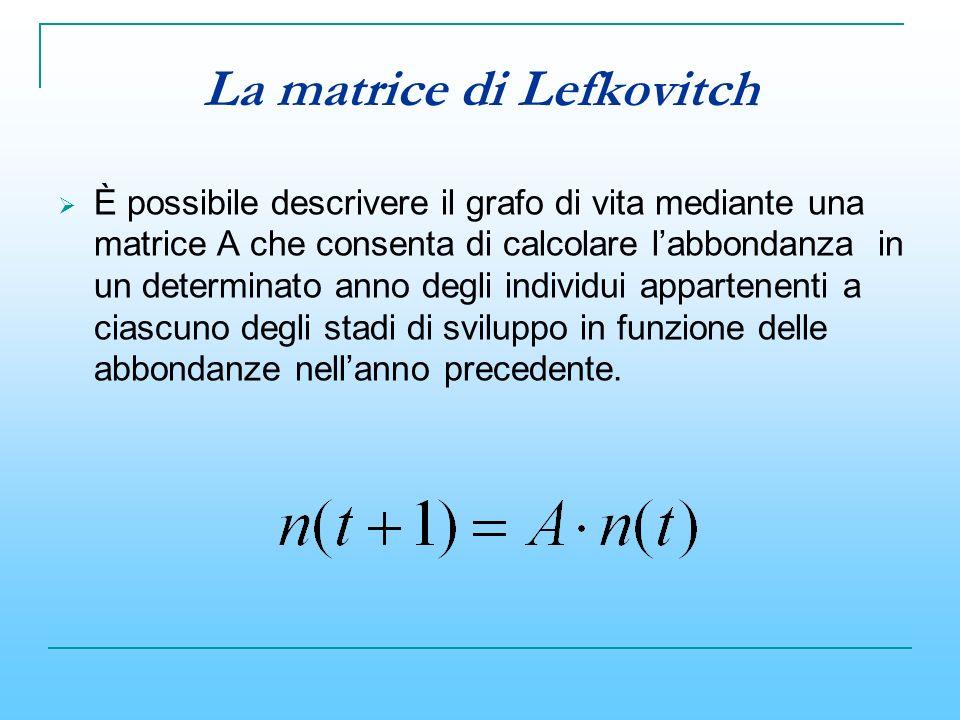 La matrice di Lefkovitch È possibile descrivere il grafo di vita mediante una matrice A che consenta di calcolare labbondanza in un determinato anno d