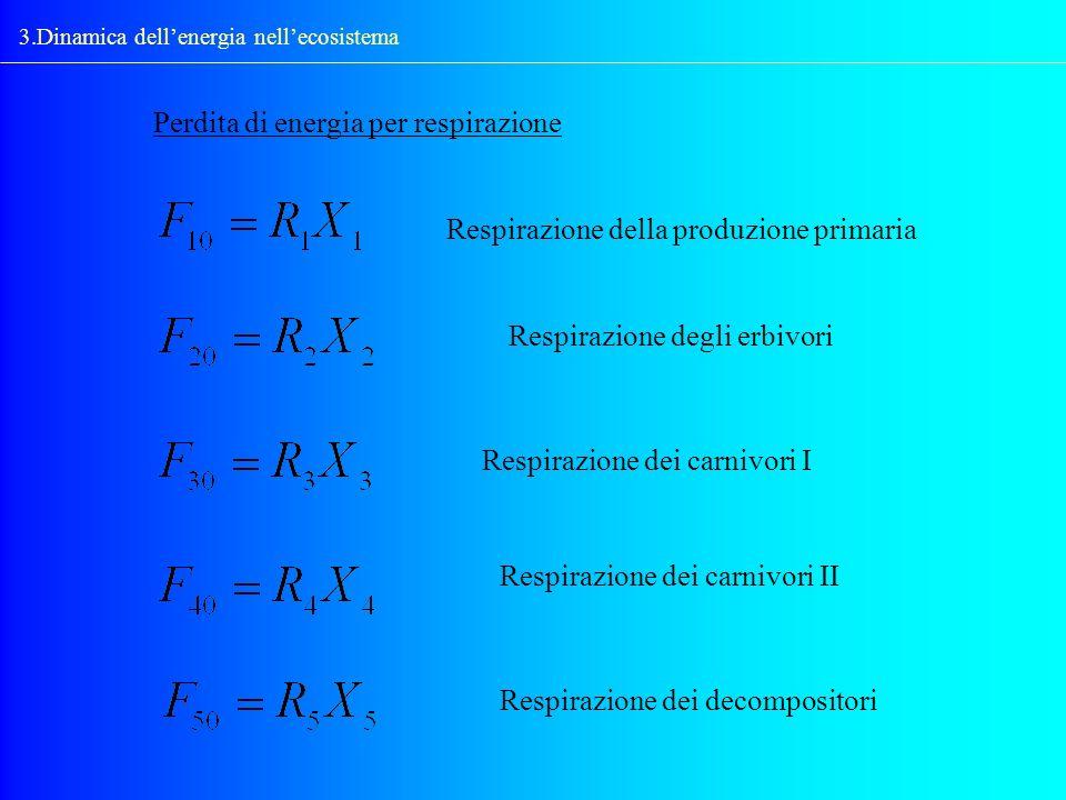 3.Dinamica dellenergia nellecosistema Perdita di energia per respirazione Respirazione della produzione primaria Respirazione degli erbivori Respirazi