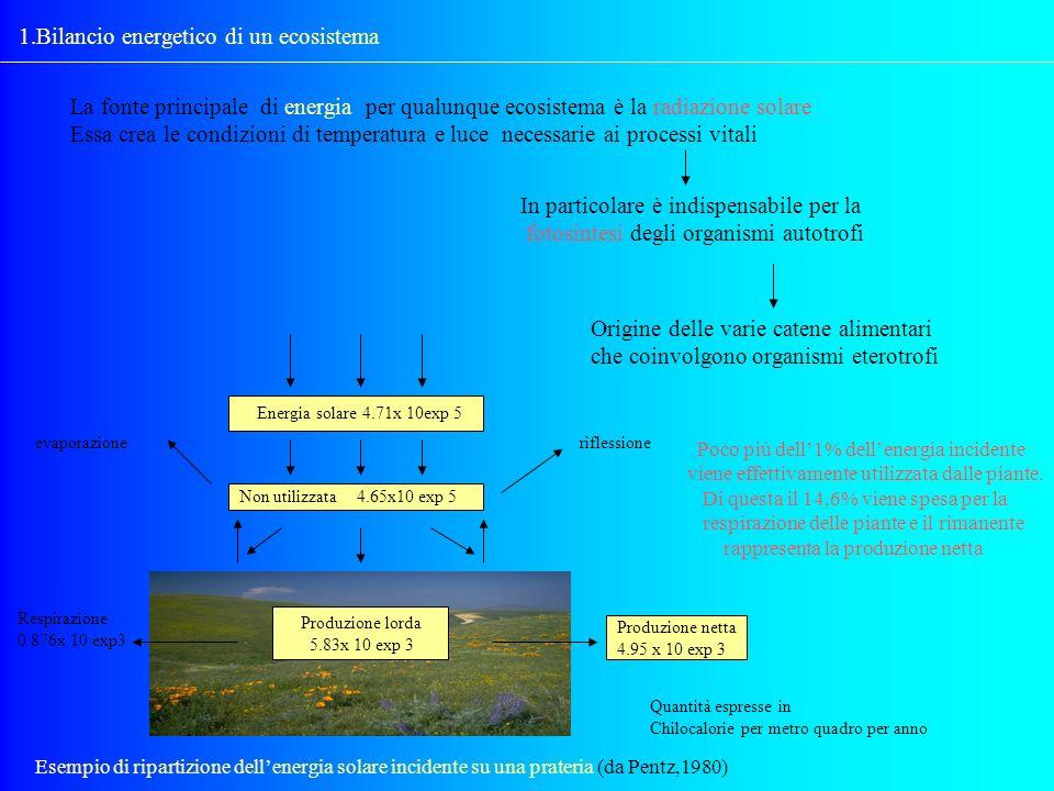 1.Bilancio energetico di un ecosistema La fonte principale di energia per qualunque ecosistema è la radiazione solare Essa crea le condizioni di tempe