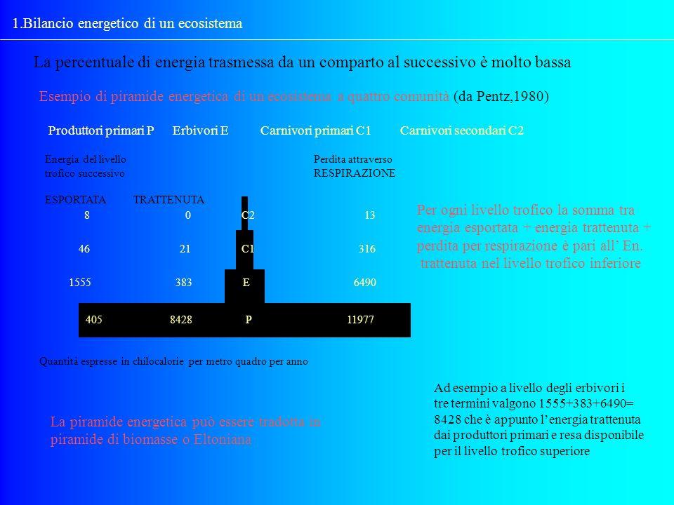 1.Bilancio energetico di un ecosistema La percentuale di energia trasmessa da un comparto al successivo è molto bassa Esempio di piramide energetica d