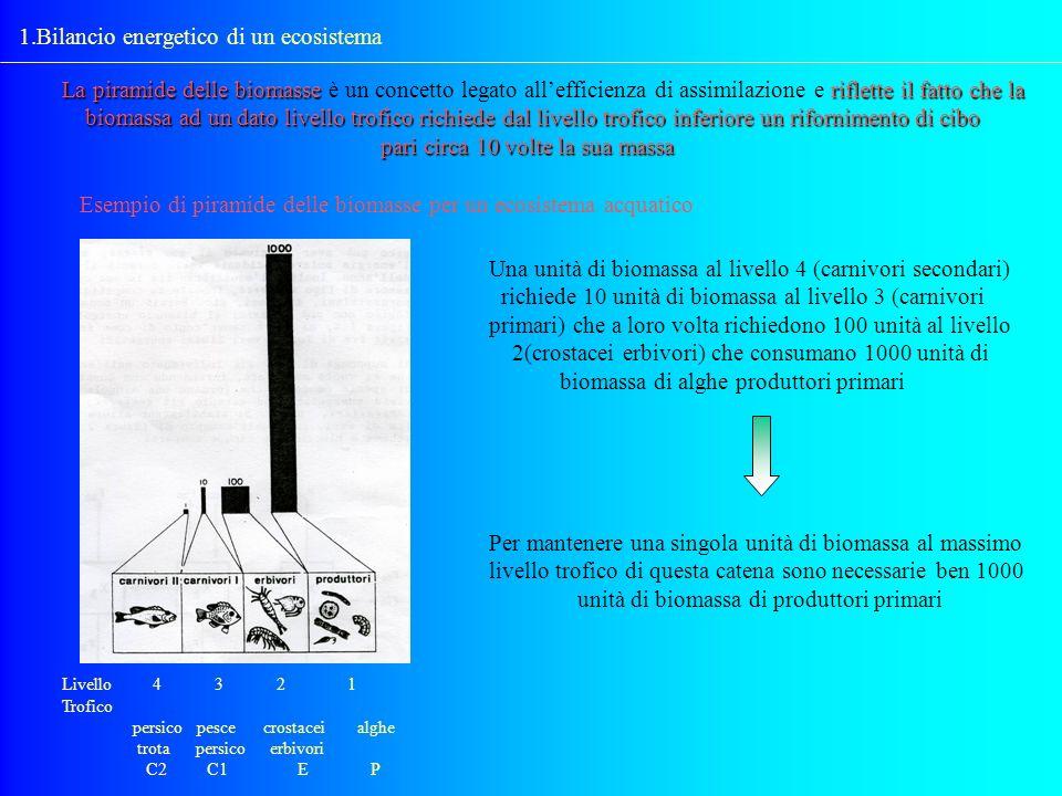 1.Bilancio energetico di un ecosistema La piramide delle biomasse riflette il fatto che la La piramide delle biomasse è un concetto legato allefficien