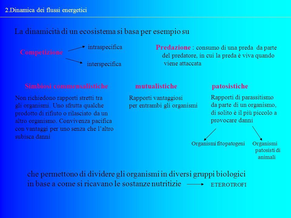 2.Dinamica dei flussi energetici La dinamicità di un ecosistema si basa per esempio su Competizione intraspecifica interspecifica Predazione : consumo