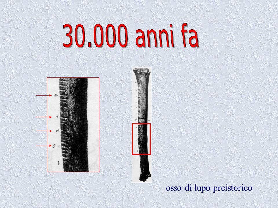 osso di lupo preistorico