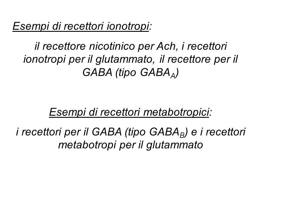 Esempi di recettori ionotropi: il recettore nicotinico per Ach, i recettori ionotropi per il glutammato, il recettore per il GABA (tipo GABA A ) Esempi di recettori metabotropici: i recettori per il GABA (tipo GABA B ) e i recettori metabotropi per il glutammato