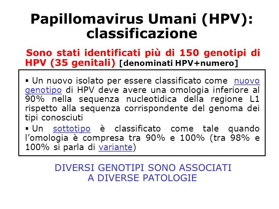 Papillomavirus Umani (HPV): classificazione Sono stati identificati più di 150 genotipi di HPV (35 genitali) [denominati HPV+numero] Un nuovo isolato