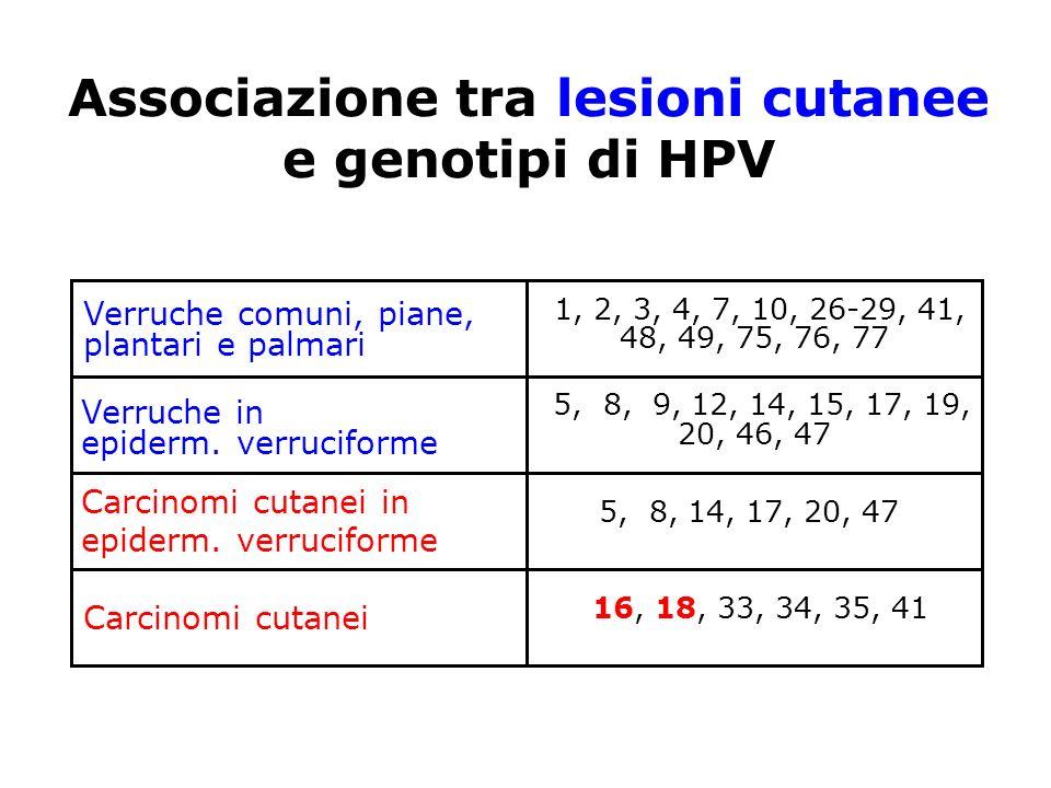 Associazione tra lesioni cutanee e genotipi di HPV Verruche comuni, piane, plantari e palmari Verruche in epiderm. verruciforme Carcinomi cutanei in e
