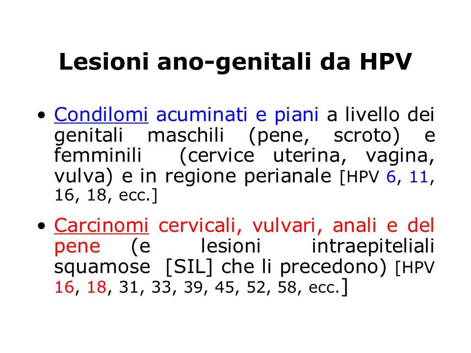 Lesioni ano-genitali da HPV Condilomi acuminati e piani a livello dei genitali maschili (pene, scroto) e femminili (cervice uterina, vagina, vulva) e