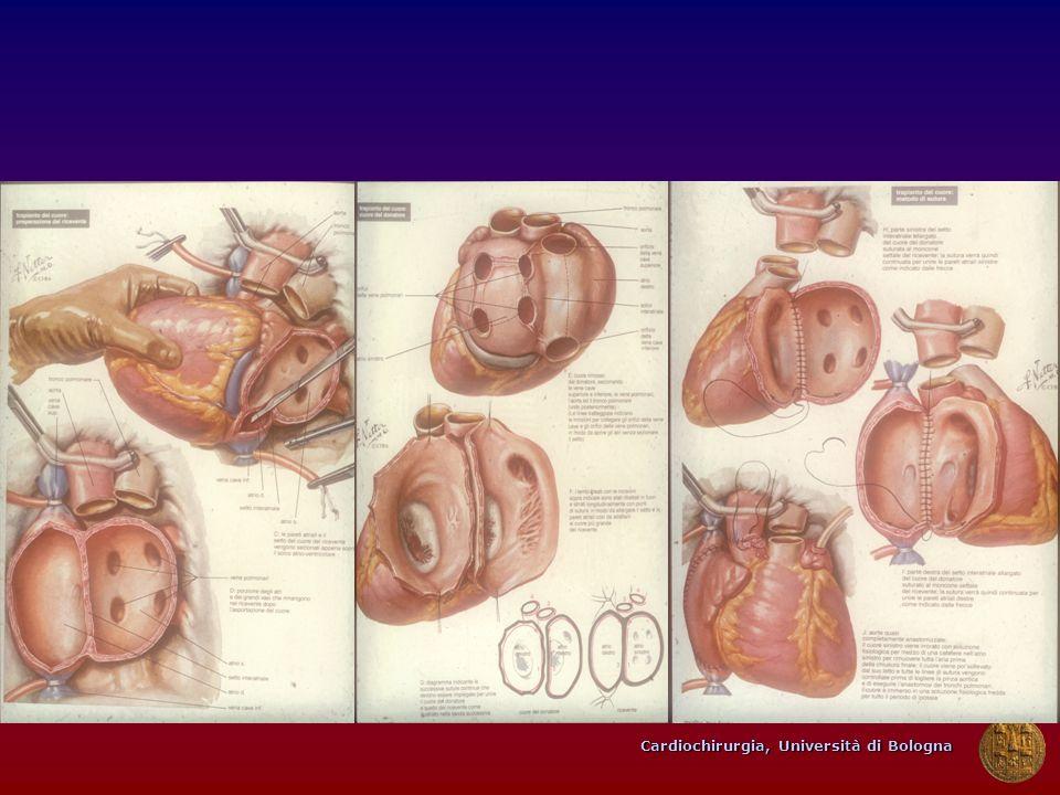 Cardiochirurgia, Università di Bologna