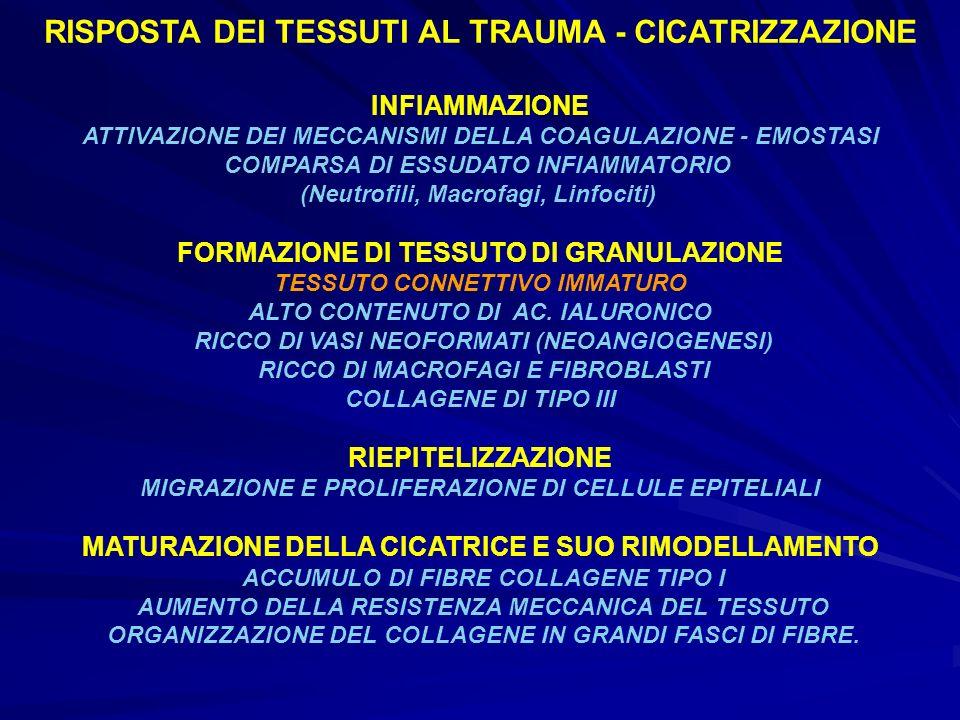 RISPOSTA DEI TESSUTI AL TRAUMA - CICATRIZZAZIONE INFIAMMAZIONE ATTIVAZIONE DEI MECCANISMI DELLA COAGULAZIONE - EMOSTASI COMPARSA DI ESSUDATO INFIAMMAT