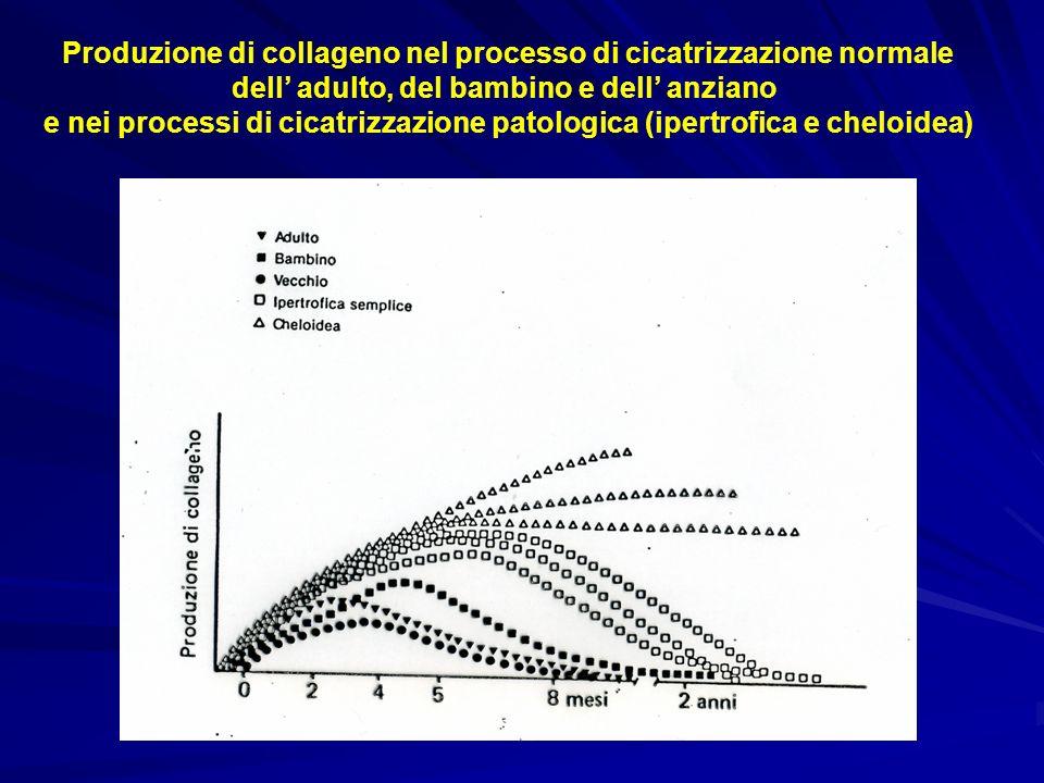 Produzione di collageno nel processo di cicatrizzazione normale dell adulto, del bambino e dell anziano e nei processi di cicatrizzazione patologica (