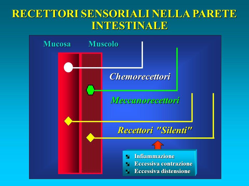 RECETTORI SENSORIALI NELLA PARETE INTESTINALE Chemorecettori Meccanorecettori Recettori Silenti MuscoloMucosa Infiammazione Eccessiva contrazione Eccessiva distensione