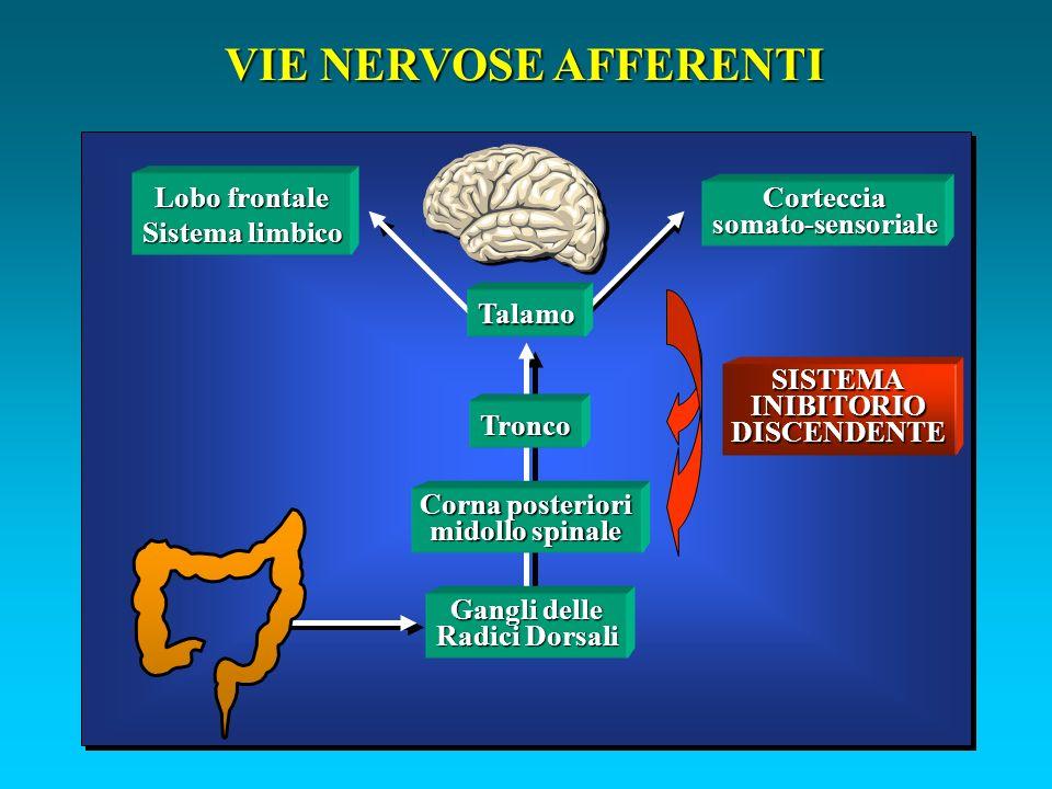 VIE NERVOSE AFFERENTI Gangli delle Radici Dorsali Corna posteriori midollo spinale Tronco Talamo Cortecciasomato-sensoriale Lobo frontale Sistema limbico SISTEMA INIBITORIO DISCENDENTE
