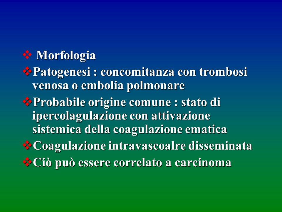 Morfologia Patogenesi : concomitanza con trombosi venosa o embolia polmonare Patogenesi : concomitanza con trombosi venosa o embolia polmonare Probabi
