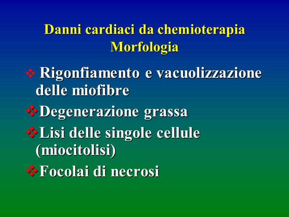 Danni cardiaci da chemioterapia Morfologia Rigonfiamento e vacuolizzazione delle miofibre Degenerazione grassa Degenerazione grassa Lisi delle singole