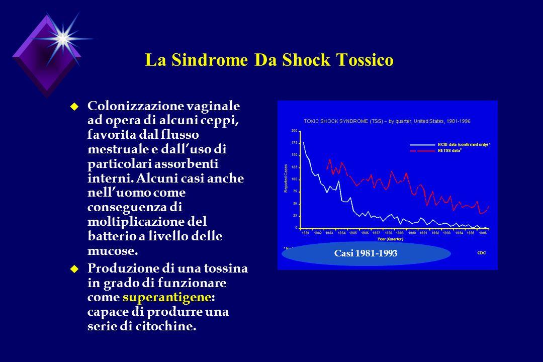 La Sindrome Da Shock Tossico u Colonizzazione vaginale ad opera di alcuni ceppi, favorita dal flusso mestruale e dalluso di particolari assorbenti int