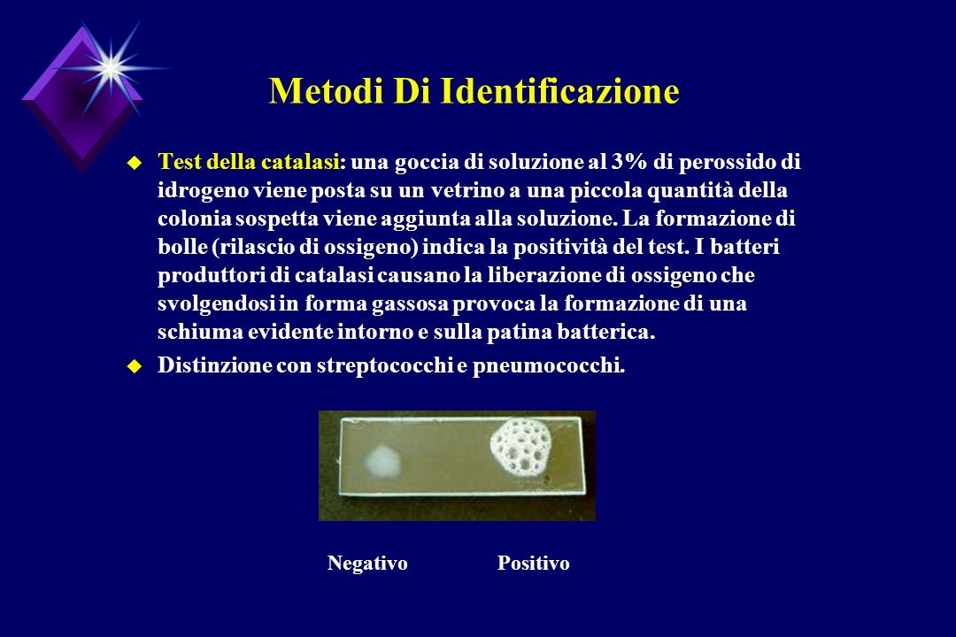 Metodi Di Identificazione u Test della catalasi: una goccia di soluzione al 3% di perossido di idrogeno viene posta su un vetrino a una piccola quanti
