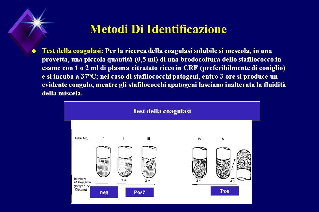Metodi Di Identificazione u Test della coagulasi: Per la ricerca della coagulasi solubile si mescola, in una provetta, una piccola quantità (0,5 ml) d