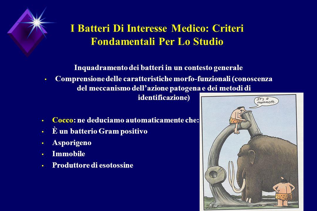 I Batteri Di Interesse Medico: Criteri Fondamentali Per Lo Studio Inquadramento dei batteri in un contesto generale Comprensione delle caratteristiche