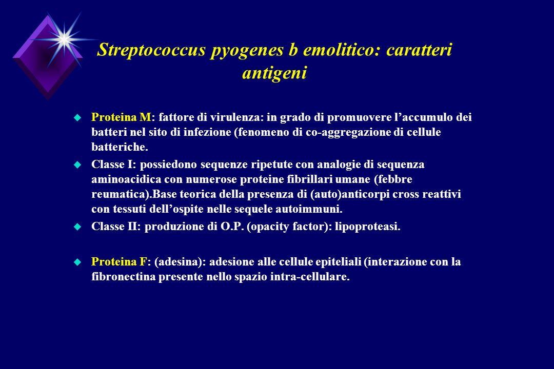 Streptococcus pyogenes b emolitico: caratteri antigeni u Proteina M: fattore di virulenza: in grado di promuovere laccumulo dei batteri nel sito di in