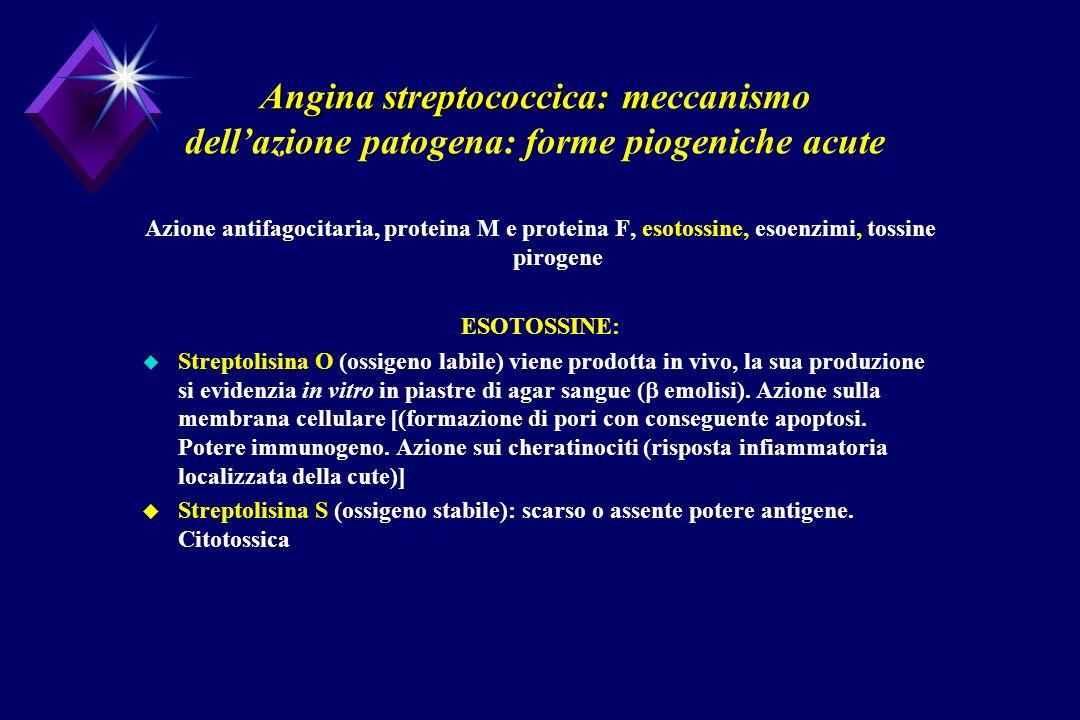 Angina streptococcica: m Angina streptococcica: meccanismo dellazione patogena: forme piogeniche acute Azione antifagocitaria, proteina M e proteina F