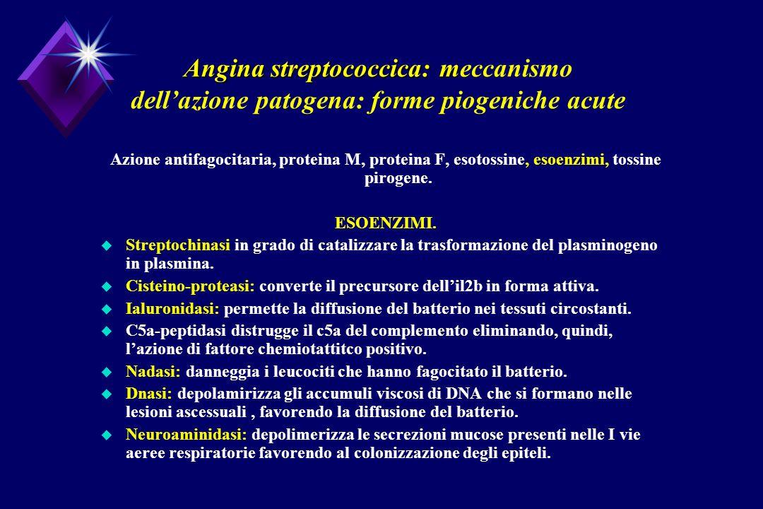 Angina streptococcica: m Angina streptococcica: meccanismo dellazione patogena: forme piogeniche acute Azione antifagocitaria, proteina M, proteina F,