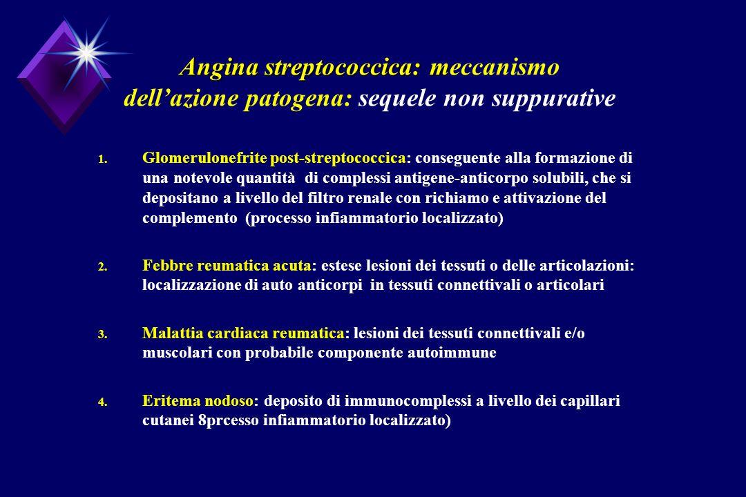 Angina streptococcica: m Angina streptococcica: meccanismo dellazione patogena: sequele non suppurative 1. Glomerulonefrite post-streptococcica: conse