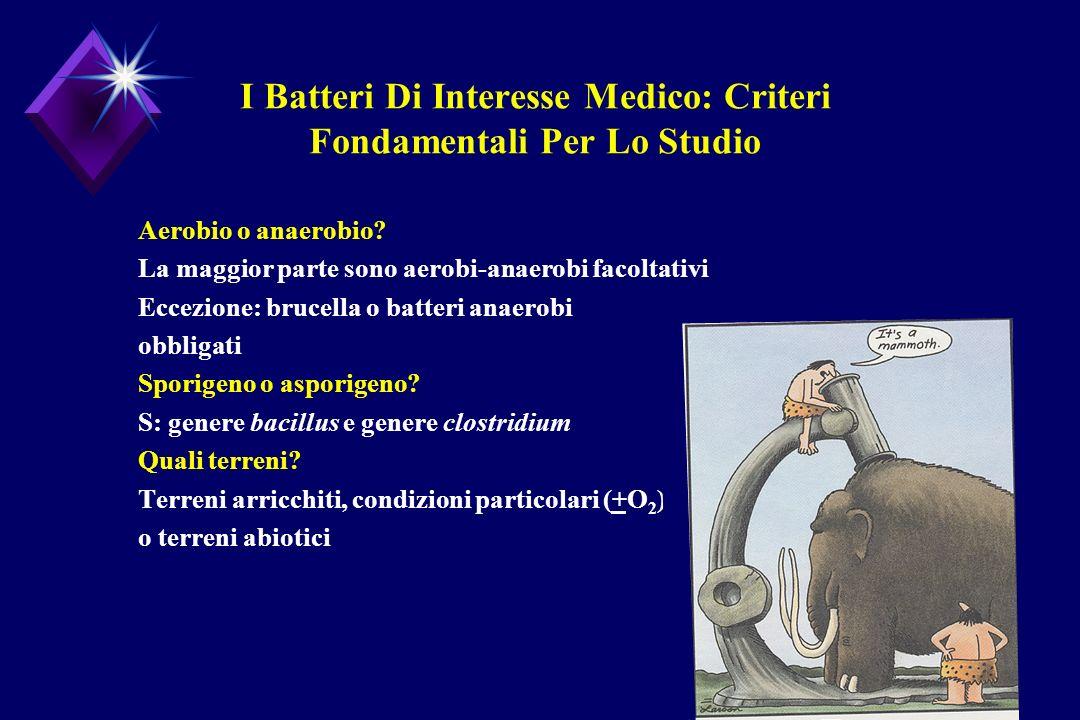 I Batteri Di Interesse Medico: Criteri Fondamentali Per Lo Studio Aerobio o anaerobio? La maggior parte sono aerobi-anaerobi facoltativi Eccezione: br
