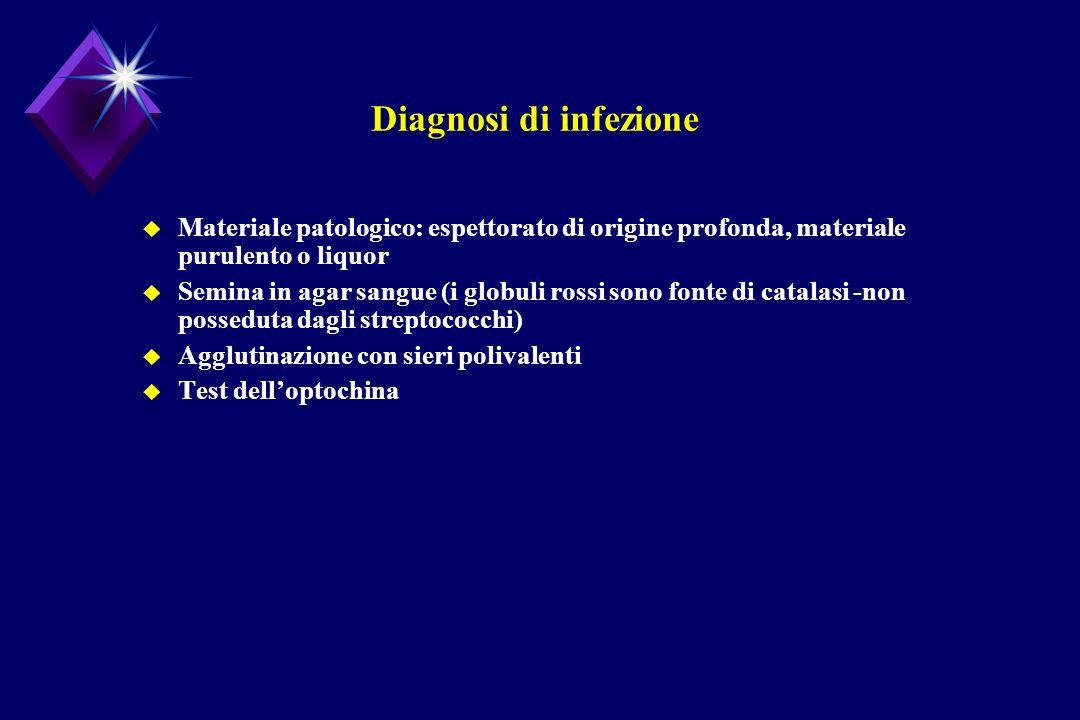 Diagnosi di infezione u Materiale patologico: espettorato di origine profonda, materiale purulento o liquor u Semina in agar sangue (i globuli rossi s