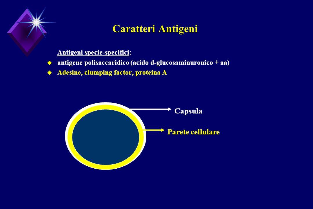 Caratteri Antigeni Antigeni specie-specifici: u antigene polisaccaridico (acido d-glucosaminuronico + aa) u Adesine, clumping factor, proteina A Capsu