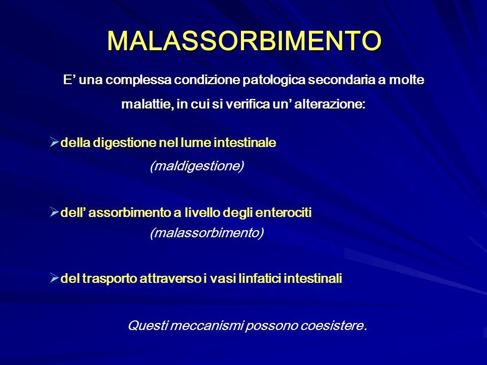 MALASSORBIMENTO della digestione nel lume intestinale (maldigestione) dell assorbimento a livello degli enterociti (malassorbimento) del trasporto att