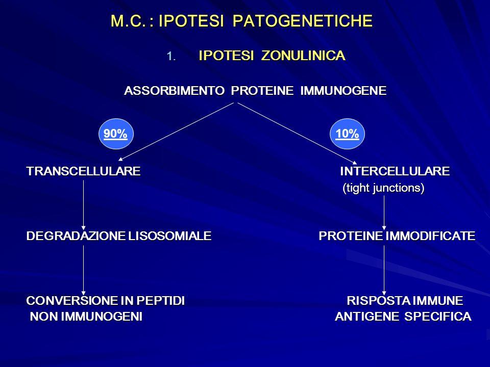 M.C. : IPOTESI PATOGENETICHE 1. IPOTESI ZONULINICA ASSORBIMENTO PROTEINE IMMUNOGENE TRANSCELLULARE INTERCELLULARE (tight junctions) (tight junctions)