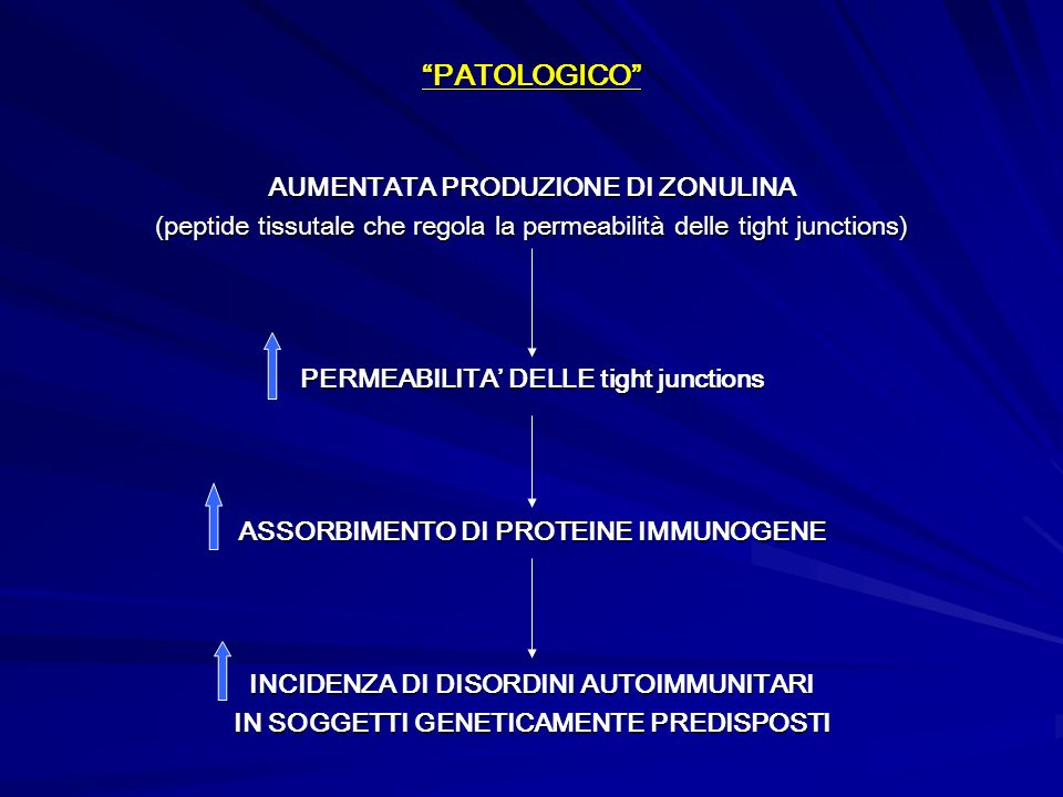 PATOLOGICO AUMENTATA PRODUZIONE DI ZONULINA (peptide tissutale che regola la permeabilità delle tight junctions) PERMEABILITA DELLE tight junctions AS