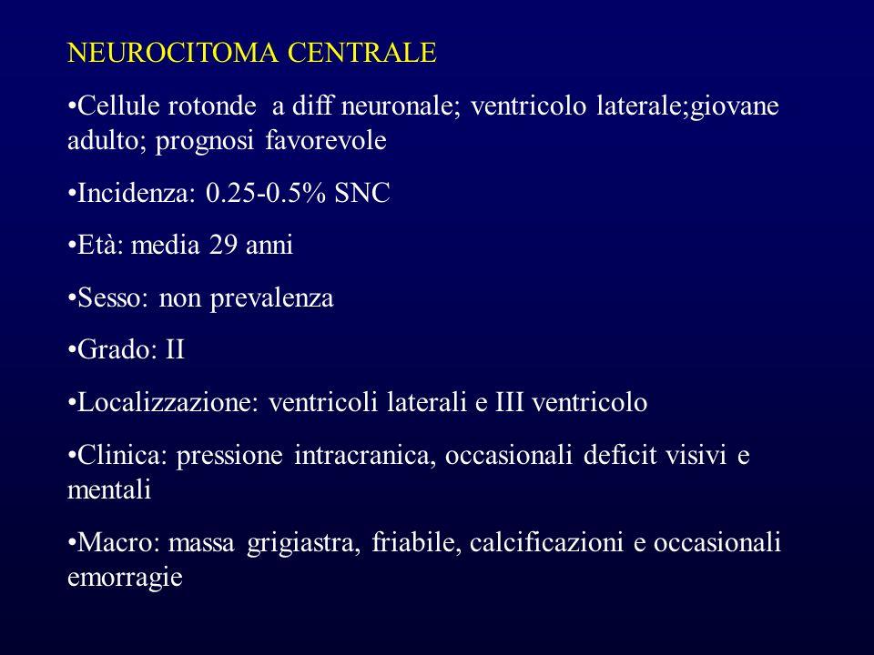 NEUROCITOMA CENTRALE Cellule rotonde a diff neuronale; ventricolo laterale;giovane adulto; prognosi favorevole Incidenza: 0.25-0.5% SNC Età: media 29