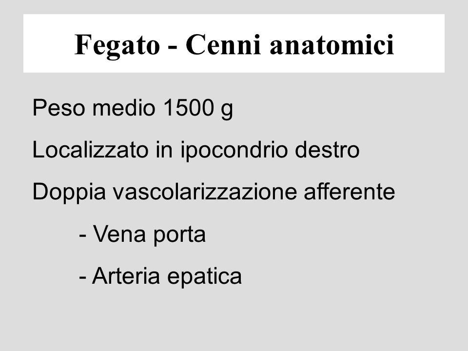 Fisiopatologia e semeiotica funzionale delle epatopatie Prof. Giampaolo Bianchi