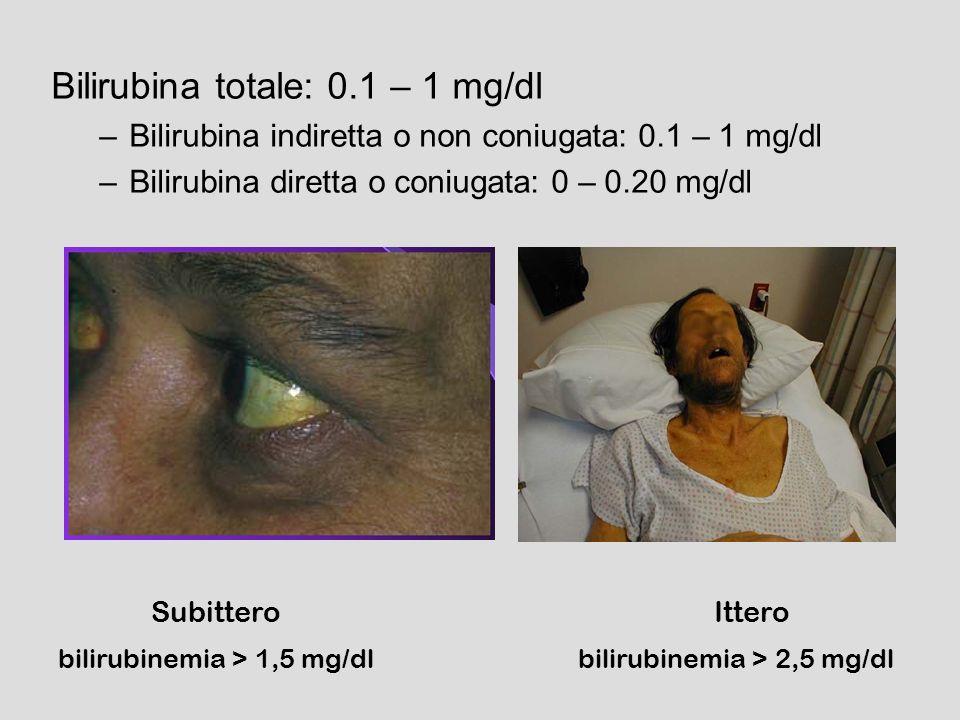 bilirubina emoglobina Trasporto (albumina) Ingresso nellepatocita CONIUGAZIONE escrezione dallepatocita trasporto biliare emolisi Sindome di Gilbert Ittero neonatale S.