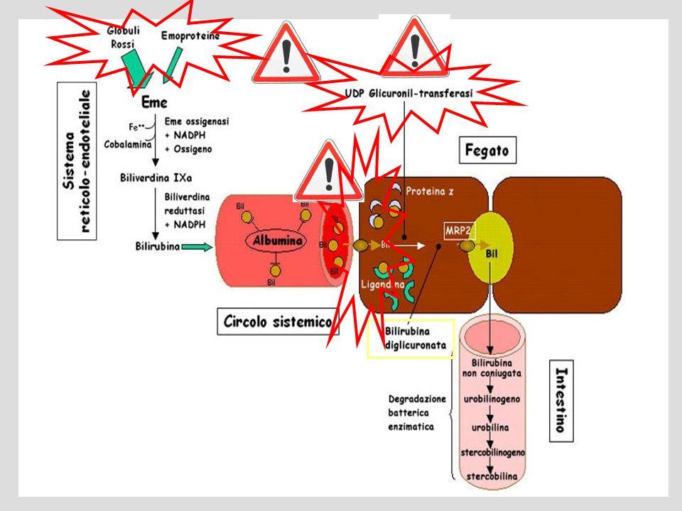 Rappresentazione schematica del metabolismo della bilirubina nella normalità e nella patologia - 1