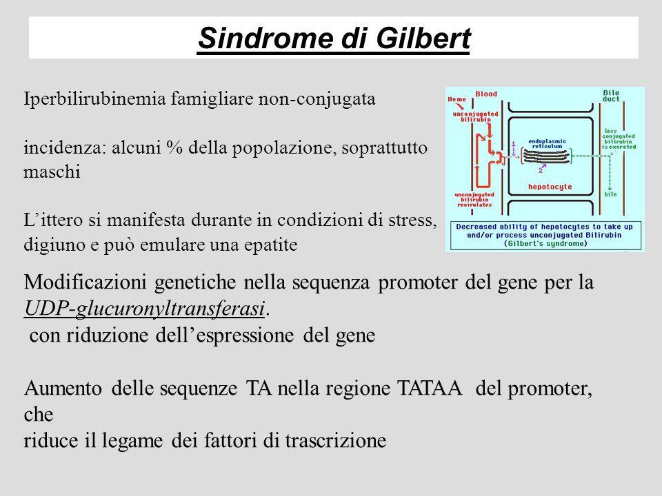 Rappresentazione schematica del metabolismo della bilirubina nella normalità e nella patologia - 2