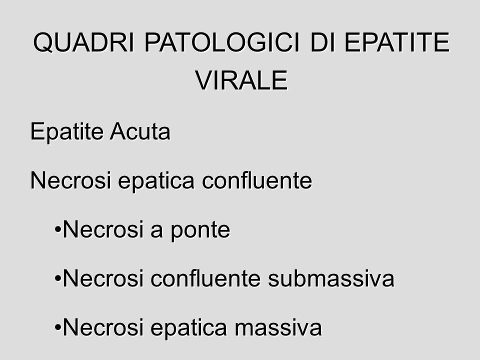 EPATITI VIRALI Virus epatotropi (A, B, C, D, E, G) Virus della febbre gialla Herpes simplex virus e CMV Virus di Epstein-Barr