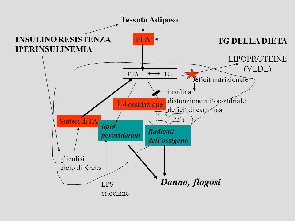 Etiopatogenesi Steatoepatite alcoolica Apporto calorico Alterazioni metaboliche Induzione dei citocromi Aumentata produzione di TNF Nonalcoholic steatohepatitis (NASH) * Insulino resistenza, obesità, DM 2, iperlipoproteinemia * Malnutrizione, calo ponderale significativo * Sostanze tossiche, farmaci Fegato grasso, steatosi epatica, steatoepatite